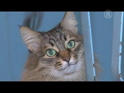 Бездомная кошка спасла