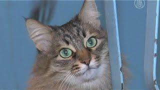 видео Кошка спасла хозяев во время пожара