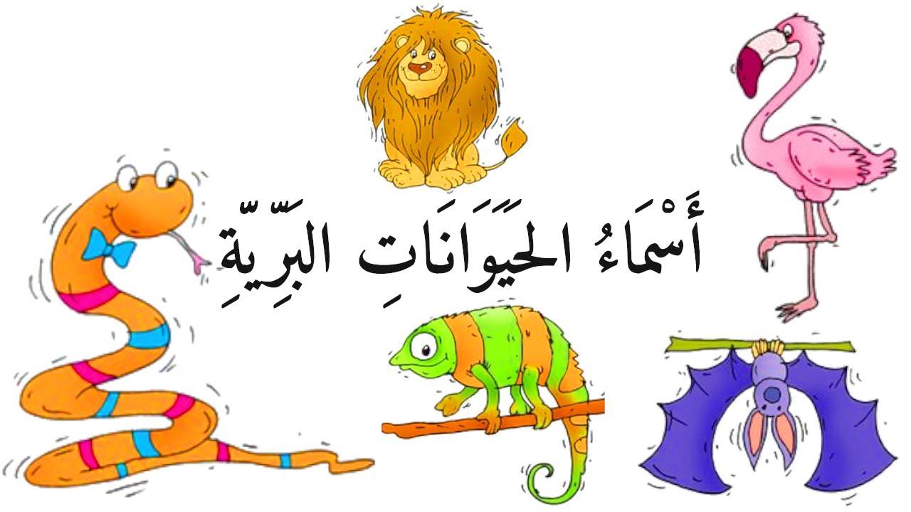 تعليم الاطفال اسماء الحيوانات البريّة والمتوحشة بالصوت والصورة | اسماء حيوانات للاطفال | اسماء الحيو