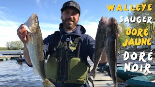 Pêche au Doré secteur des Îles de Sorel, Walleye fishing in Sorel islands