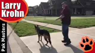German Shepherd Training / Fixing reactivity and repairing bad training