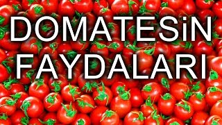 Video Domatesin Faydaları MSGY014 download MP3, 3GP, MP4, WEBM, AVI, FLV Desember 2017
