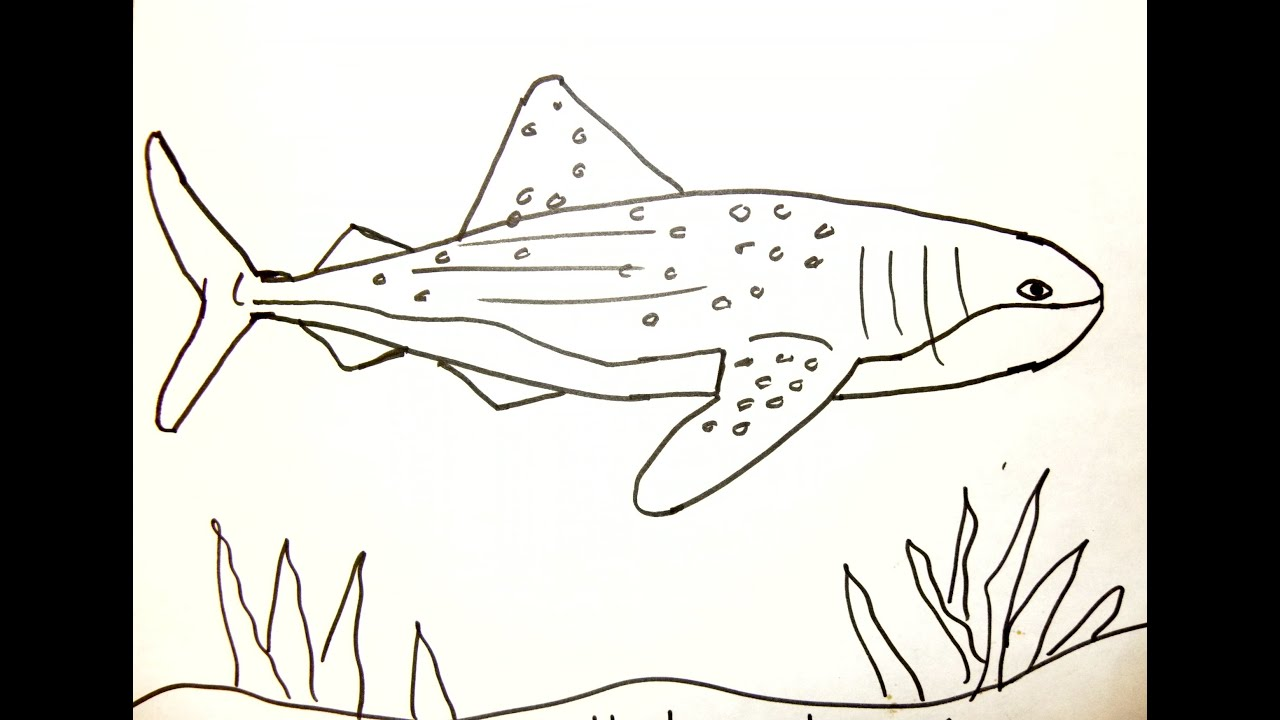 Uncategorized How To Draw A Sharks kids can draw whale shark youtube