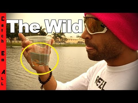 My First WILD BETA FISH!