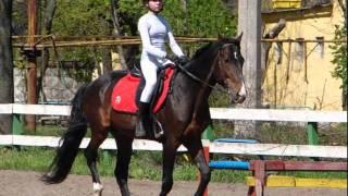 mučenje konjev za vse ki so proti tmu
