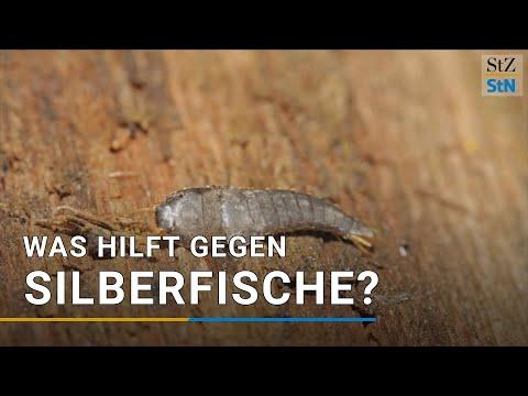 silberfische-erkennen,-bekämpfen-und-endgültig-loswerden-[tipps-&-tricks]