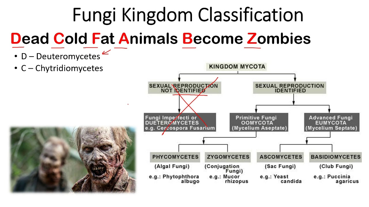 hight resolution of kingdom fungi classification trick to remember