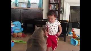 KID GETS ATTACKED BY PITBULL! CAUGHT ON TAPE