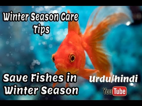 Winter Season Tips | Save Fishes In Winter Season !!! Urdu And Hindi