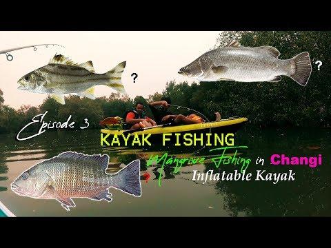 Kayak Fishing Singapore Episode 3 - Recce Mangrove Fishing In Changi