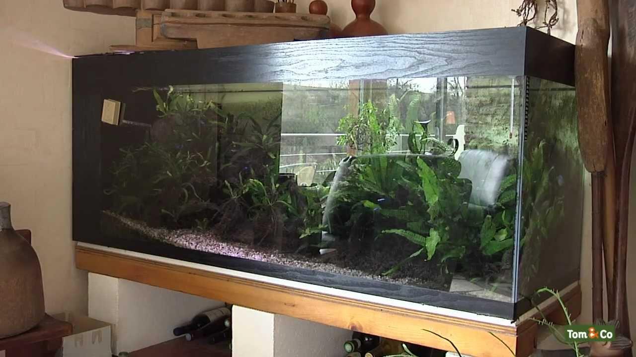 het warmwateraquarium mijn vissen tom co