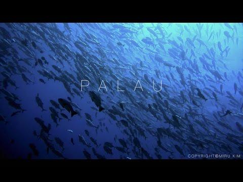 Palau | Underwater (4K) - SONY RX100 MKIV scuba
