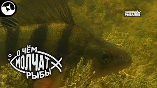 Ихтиофауна дельты Волги О чем молчат рыбы