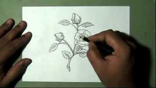How to Draw rose flower with buds and leaves