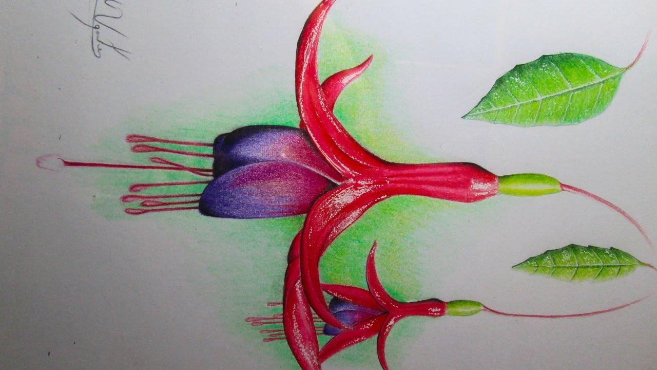 Dibujo de una flor realista con lpices de colores Chilco con