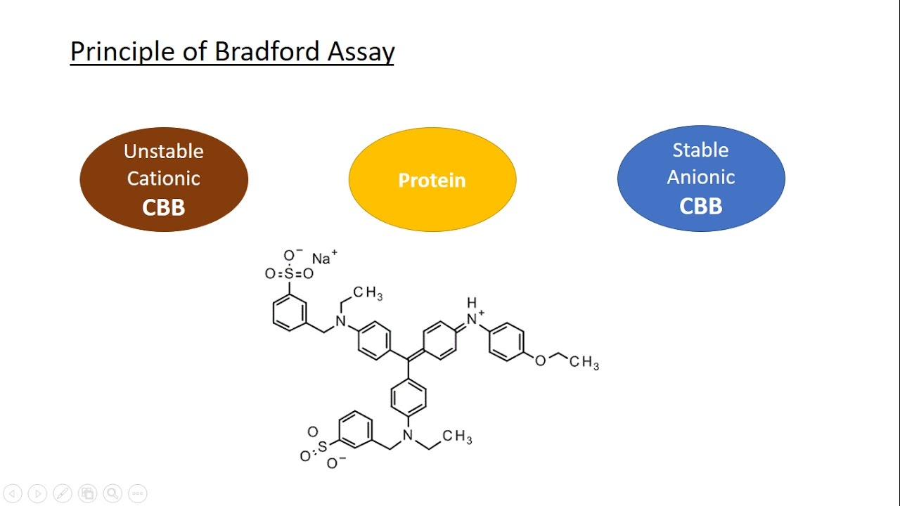 why is 595 nm used in bradford assay