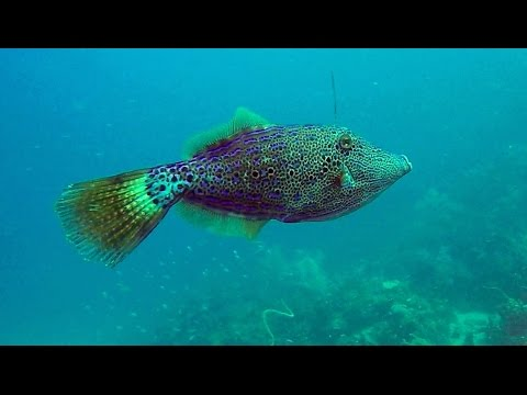 Dive Granada - Fish Variety - Romancing The Globe Travel Blog