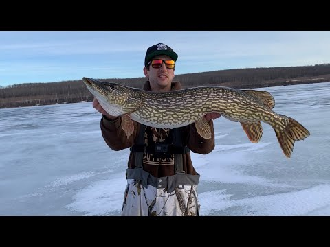PIKE Fishing FIRST Ice!! (4 Fish Over 11lbs With My Wife!!) Alberta 2019