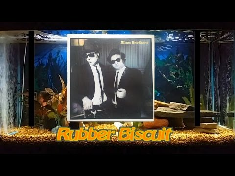 Rubber Biscuit   The Blues Brothers   Original   5