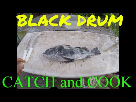 BLACK DRUM Catch And Cook