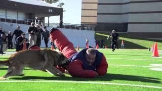 Hard Dog, Fast Dog