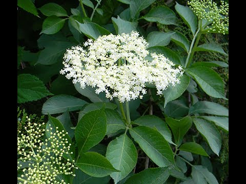 цветы фото и свойства