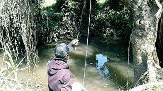SERU MANCING IKAN WADER BIKIN KETAGIHAN - SPOTTED BARB FISHING