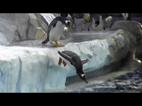 First Look: Polk Penguin Conservation Center At The Detroit Zoo
