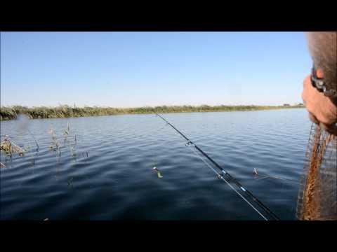 ловля окуня с берега на озерах
