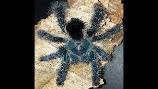 [벌러지오그래픽]장화신은 거미 메탈릭핑크토입고! 느릿느…