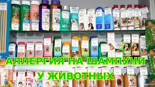 Аллергия на шампуни у животных