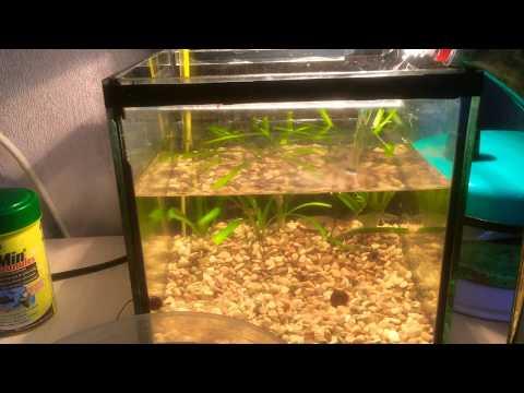 Как делать подмену воды в маленьком аквариуме