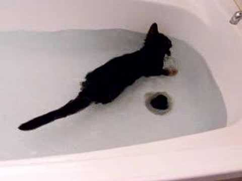 Simple Cat Bathing Tips: Washing Your Cat Without Getting