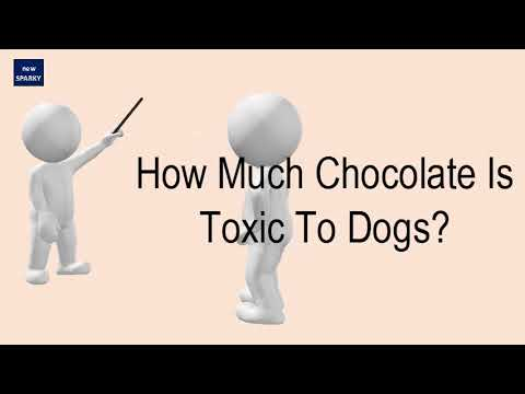 How Much Chocolate Is Toxic To Dogs YouTube