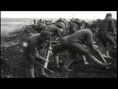 US  5th Marine Regiment lay prone on the ground and dig a trench with an axe duri...HD Stock Footage