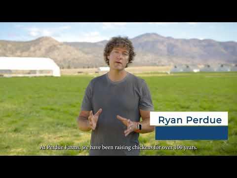 Perdue Farms Expands Pasture-Raised Chicken Program, Unique...
