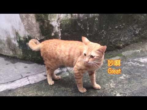 姑娘捡了只流浪猫,后来发现猫肚子越来越大,医生一番话让她崩溃