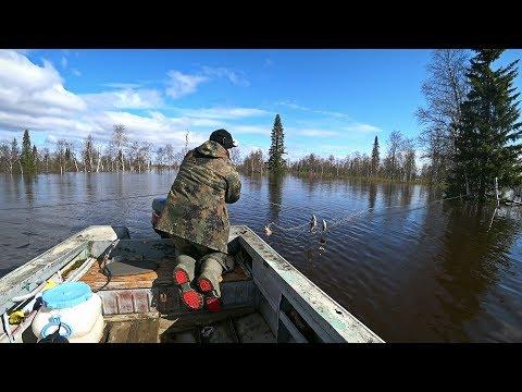 РЫБАЛКА НА СЕТИ В ЗАТОПЛЕННОМ ЛЕСУ. Нашли ход рыбы.
