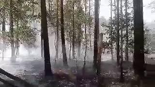 Węgliniec pożar lasu