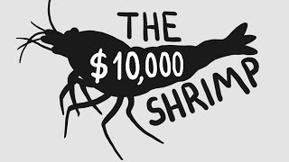 The World's Most Expensive Shrimp ($10k)
