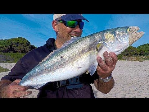 AWESOME SURF FISHING AUSTRALIAN SALMON EAGLE BAY W.A