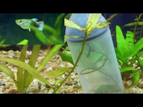 How To Make  (DIY) Anchors For Aquarium Live Plants