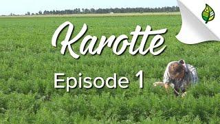 KAROTTE (1/3) -  Wie und wo sie wächst