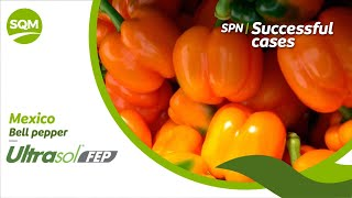 SPN Successful cases, Bell pepper – Mexico