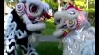 A Lion Story - Gio Nam Mua Lan Productio...