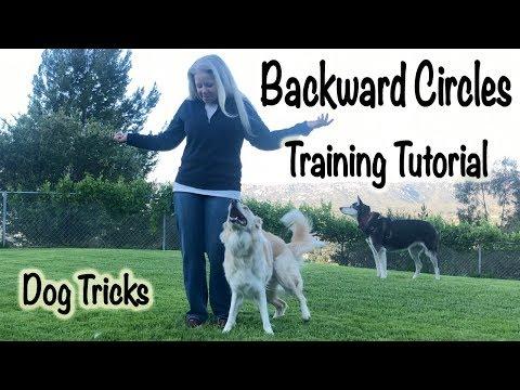 Backward Circles: Dog Trick Tutorial