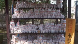 東京都世田谷の招き猫発祥の地(諸説あります)として有名な豪徳寺で撮影...