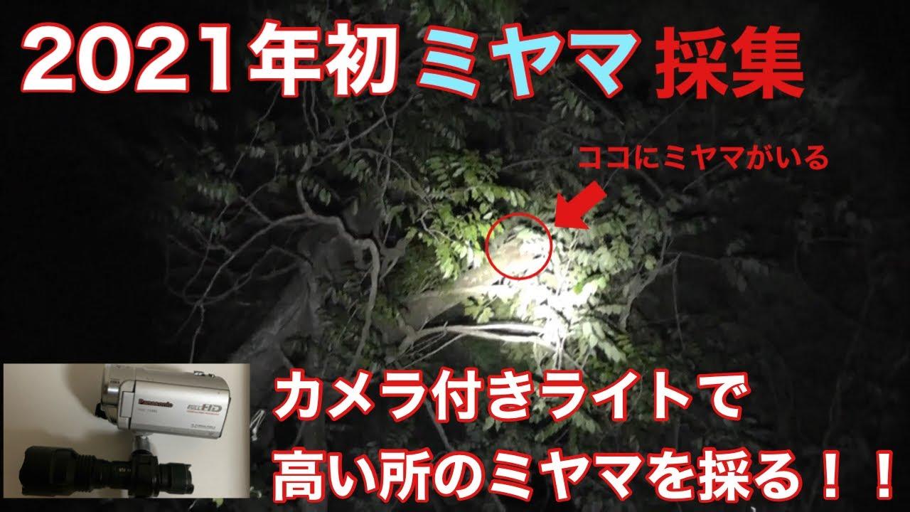 【採集】カメラ付きライトで高い所のミヤマを採る【ミヤマクワガタ】