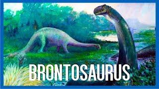 Brontosaurus - IRL