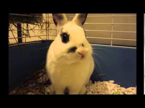 Wenda králík